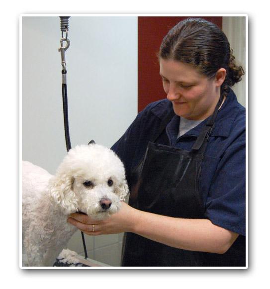 Charlotte pet grooming