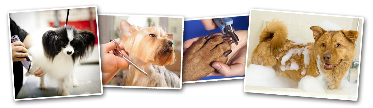 charlotte pet Grooming Photos