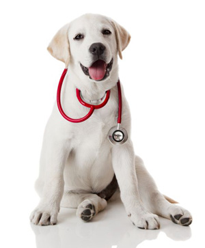 Vets in Charlotte | Veterinary Services | Charlotte, NC